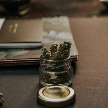 Cannabis thérapeutique : début de l'expérimentation en France