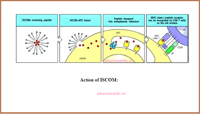 What are ISCOMS Immune Stimulatory Complexes ACTION
