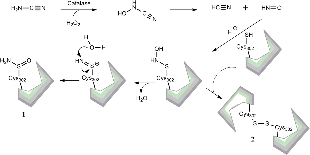Aldehyde Dehydrogenase Inhibitors: a Comprehensive Review