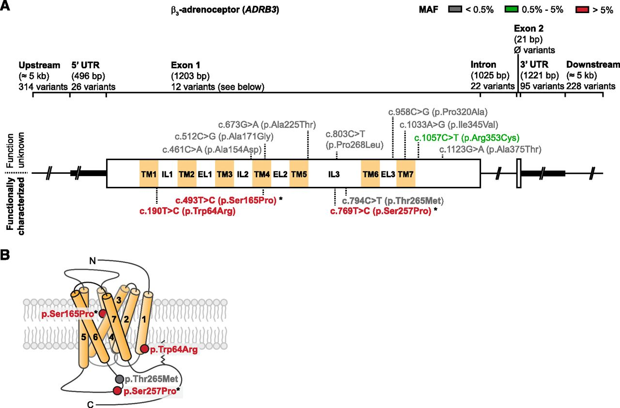 hight resolution of download figure polymorphic variants of adrenoceptors pharmacology physiology and download figure kt 3 way switch wiring diagram variations