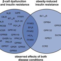 Venn Diagram Type 1 And 2 Diabetes Flat Gun G Proteincoupled Receptors Targeting Insulin Resistance
