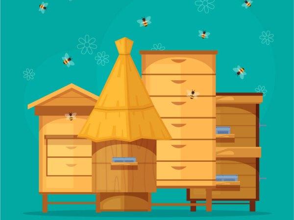 Procurement Notice for Beehives