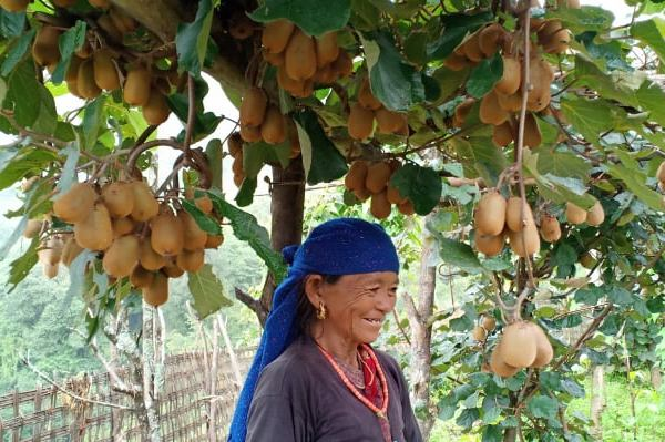 From Barren to Productive : the success of Kiwi farm in Gorkha