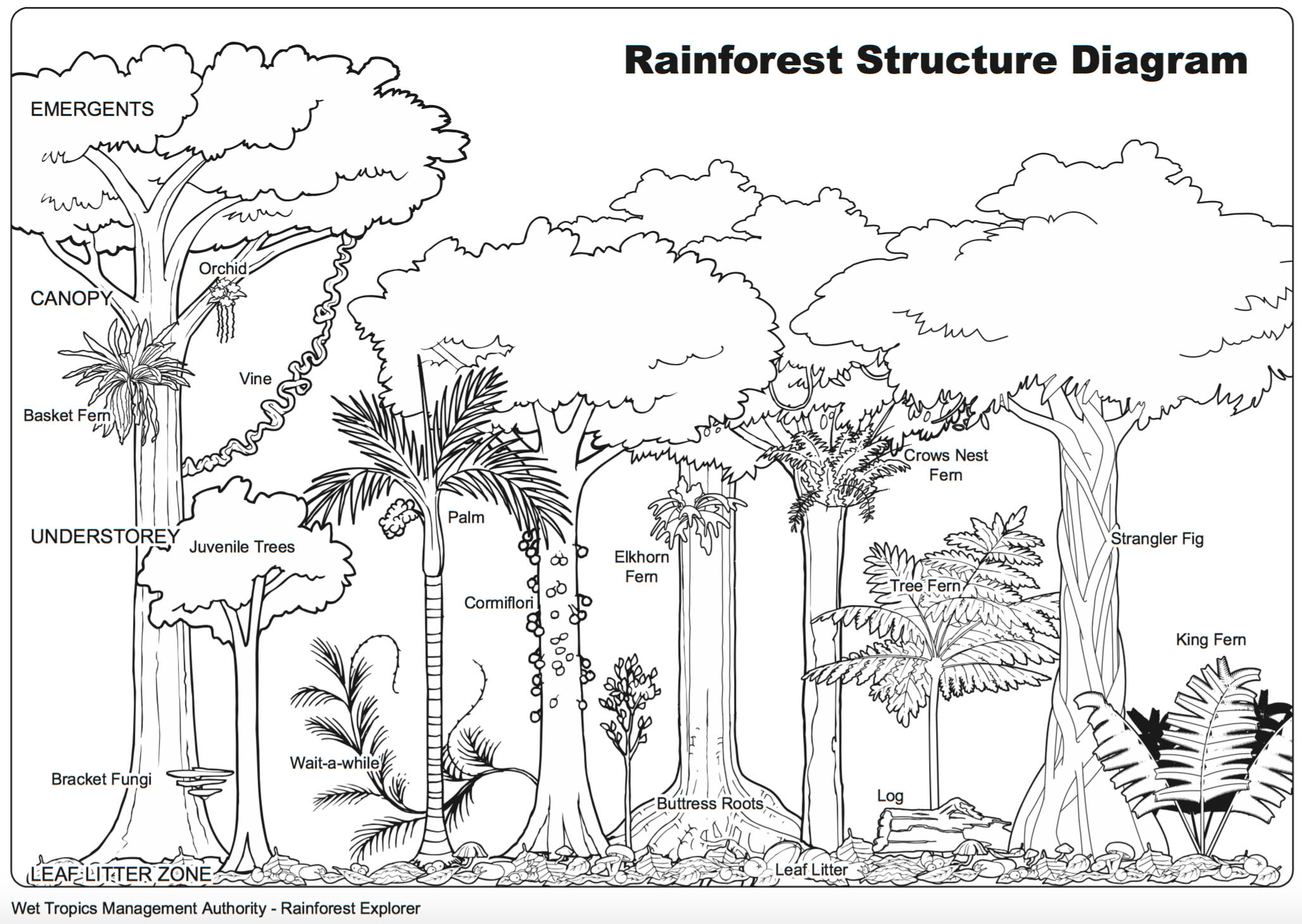 diagram of a tropical forest bmw e39 business radio wiring cruising in the canopy  phasmidexpedition