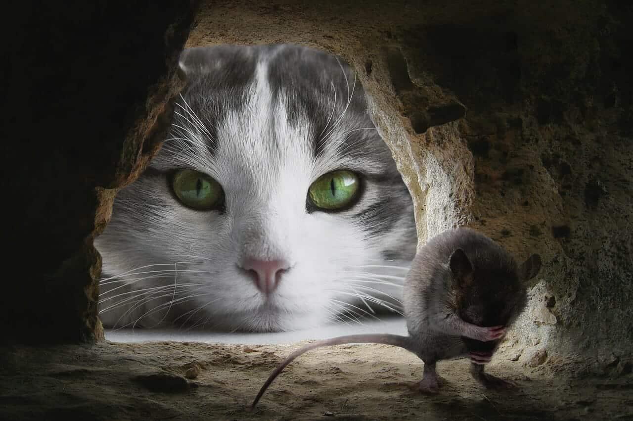 cat 4068840 1280