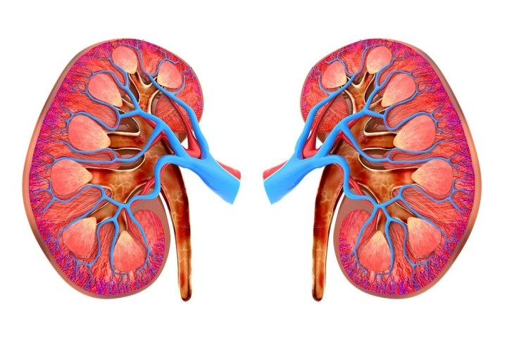 10 Habits That Damage Your Kidneys!