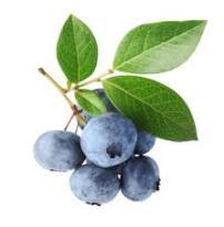 ingredients-Bilberry