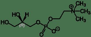 Alpha GPC  - revision ingredient