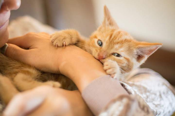 Keep Your Beloved Fur Baby Healthy: De-Worm Pet Cats At Home!