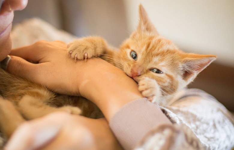 Keep Your Beloved Fur Baby Happy And Healthy: De-Worm Pet Cats At Home!