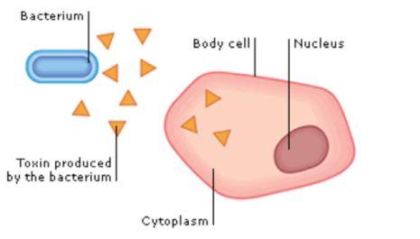 nucleus&