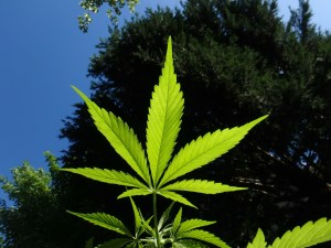 Jeff Tries Cannabis Part 3: HPLC Method Development