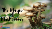 Science Shows the Power of Magic Mushrooms