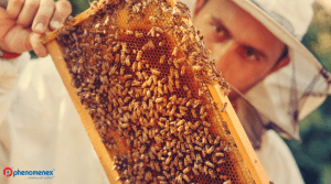 Beekeeper Trains Bees to Produce Cannabis-Infused Honey