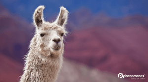 Llamas Could be the Key for a Universal Flu Vaccine