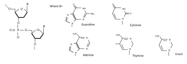 Oligonucleotides structure
