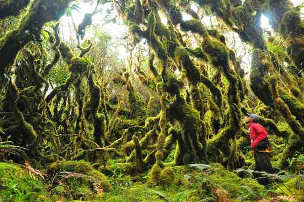 The Mossy Forest of White Peak in Compostela Valley
