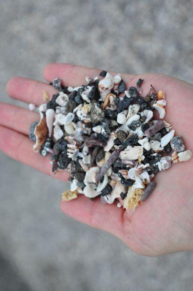 Der Strand auf Fernandina besteht aus Lavabröckchen, Muscheln und Knochenstücken