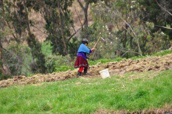 Die Felder um Ingapirca werden immer noch in harter Handarbeit bewirtschaftet.