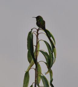 Auch auf dieser Höhe gibt es Kolibris