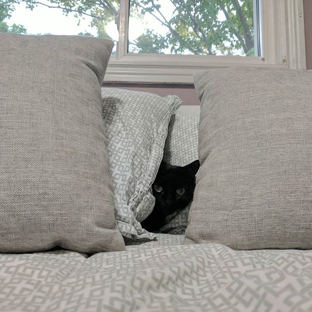 "Fiona is playing her favourite game...""Hide, but don't seek"" #catsofinstagram #blackcat"