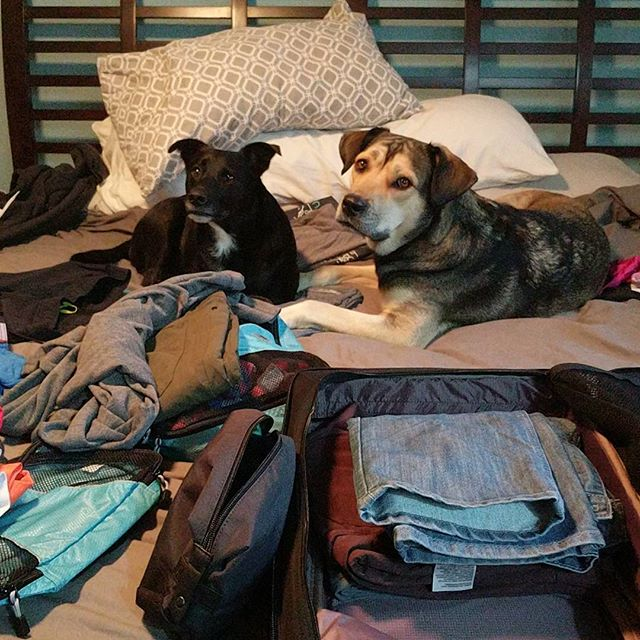My two assistants are helping me pack for #a8cgm 🤣 ️See you tomorrow Whistler!