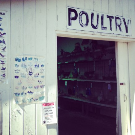 Poultry Cumberland county fair Maine