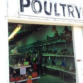 http://philadelphia-artist.com/maine-artist-paints-poultry-fair/