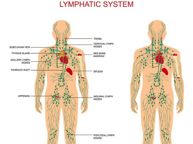 diagram lymph nodes on back of head 2001 saturn sl ignition wiring swollen homeopathic treatment by dr tsan