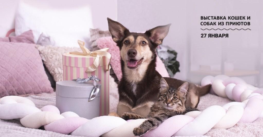 «Юна-Фест». Выставка кошек и собак из приютов пройдет 27 января в ЦСИ Винзавод.