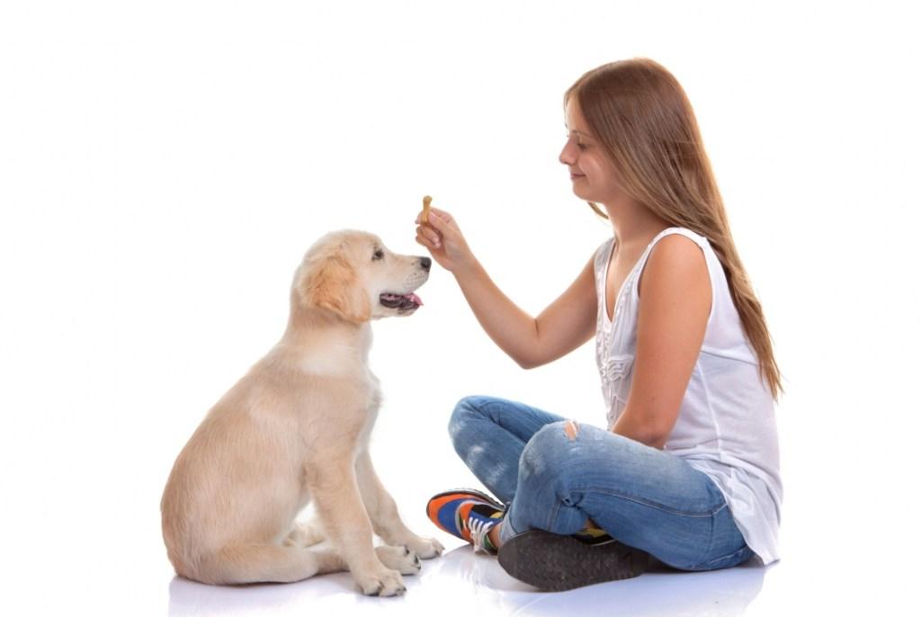 Щенки-супергерои: зачем собакам-поводырям счастливое детство