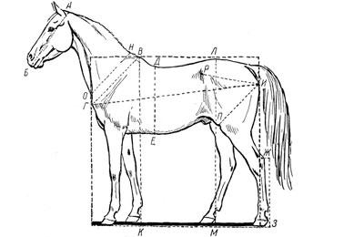 Лошади – предатели