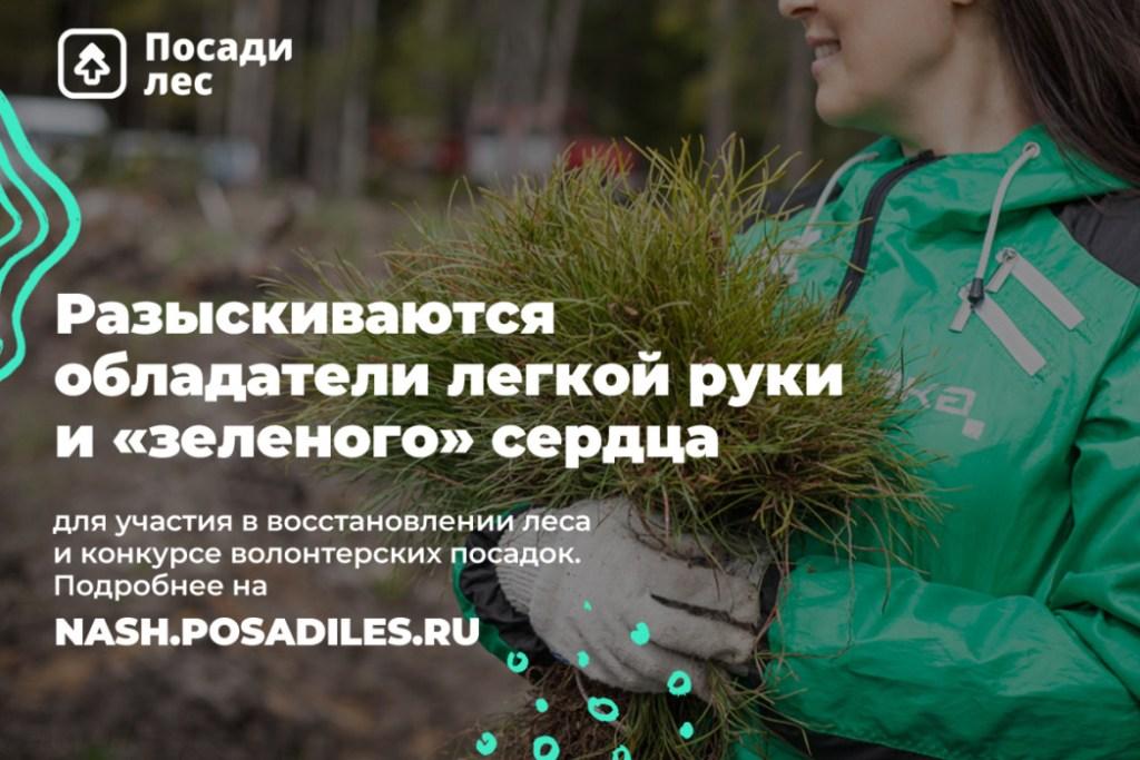 За организацию лесопосадок можно получить награду
