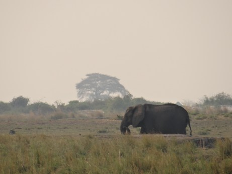 Elephant in Botswana on safari in Chobe - good safari planning achieved this