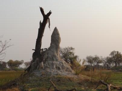 Termite hill in Okavango Delta