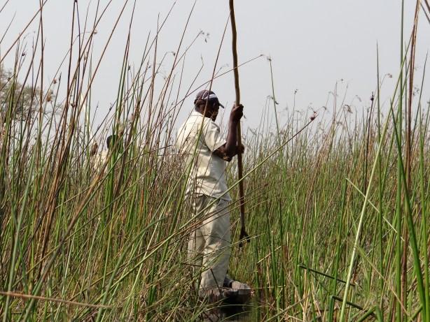 Mokoro and guide Okavango Delta before we begin the walking safari in Botswana