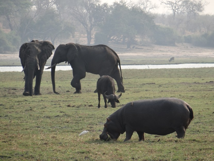 Chobe National Park safari cruise
