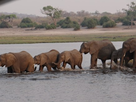 Time for a swim in Chobe River
