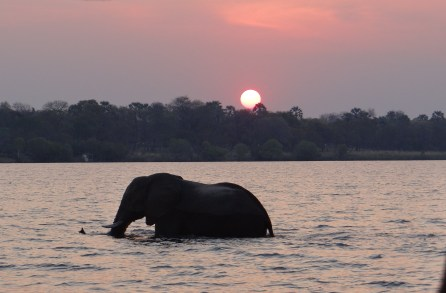 Elephant at Sunset on the Zambezi