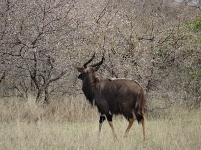 Safari animal stroll