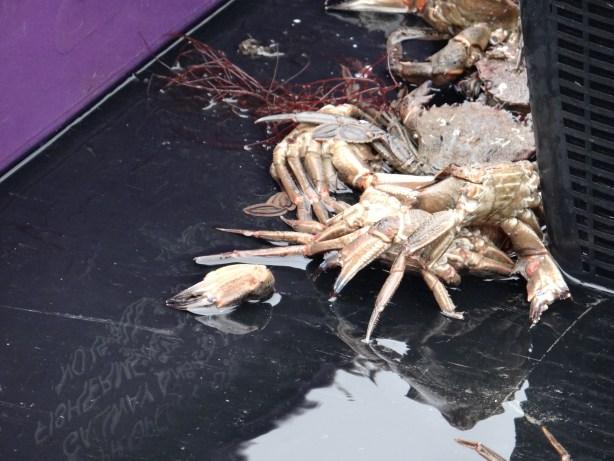 Crab in Dublin