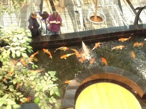 Changi Koi Pond