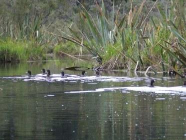 Ducks Lake Mapourika