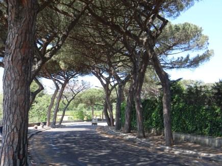 Beauty of Naples trees