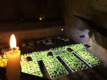 Underground Naples plants