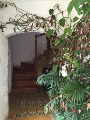 Airbnb gozo house plant inside