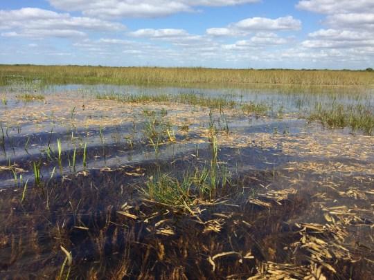 Florida River of Grass Everglades tour