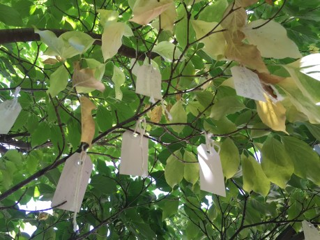 Many Wishes tied to Wish Tree for Washington DC