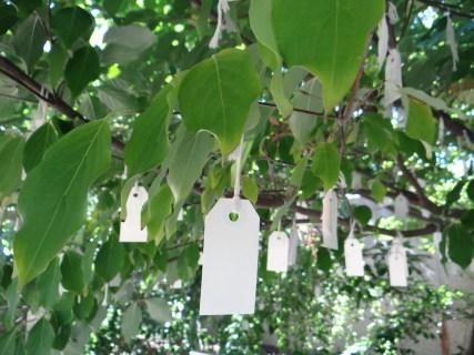 Under the Wish Tree for Washington DC