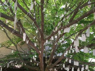Wish Tree for Washington DC by Yoko Ono